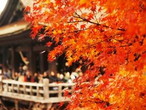 京都の紅葉を車椅子で回るには?ホテルやスポットって?