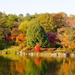 紅葉が楽しめる神社や庭園で、関東の穴場って?