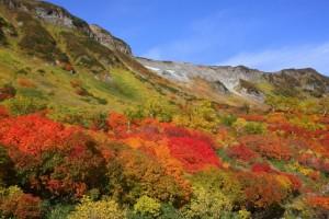 関東の紅葉で日帰りできるハイキングスポットって?